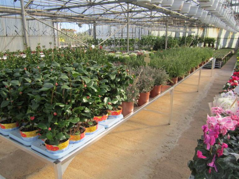 horticulture - pépiflex zone de production