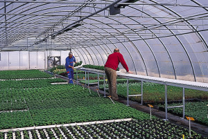 horticulture - bandes transporteuses a rouleaux
