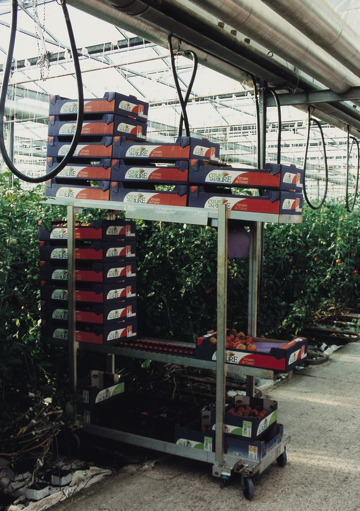 horticulture - chariot pour cueillette des tomates