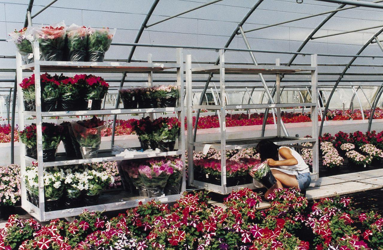horticulture - chariot de transbordement