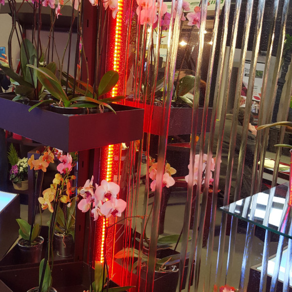 mur d'eau pour presentation fleuriste