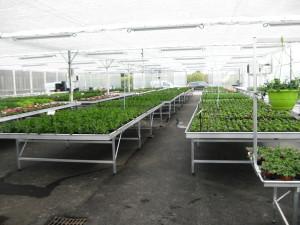 horticulture - tables de production fixes