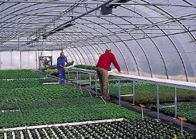 Jardinerie et Horticulture - bande transporteuse a rouleaux