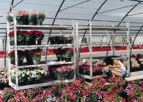 Jardinerie et Horticulture - chariot de transbordement