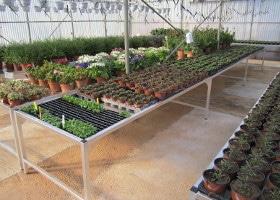Jardinerie et Horticulture - pépiflex zone de production