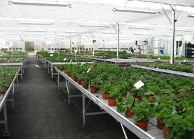 Jardinerie et Horticulture - tables de production fixe