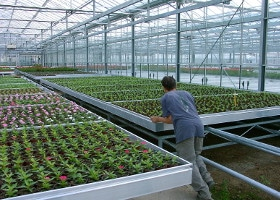 Jardinerie et Horticulture - tables et bacs semi roulants