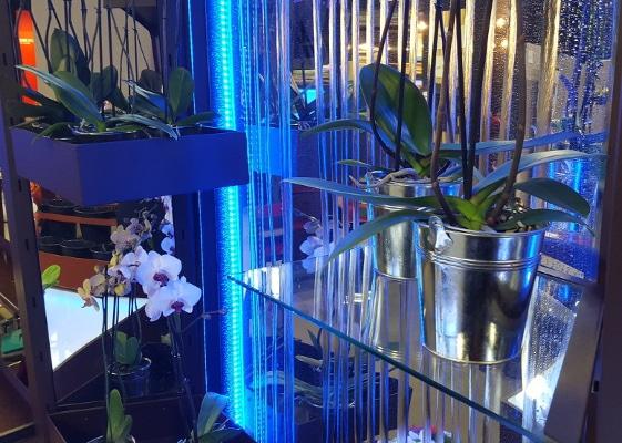 Fleuristerie - mur d'eau