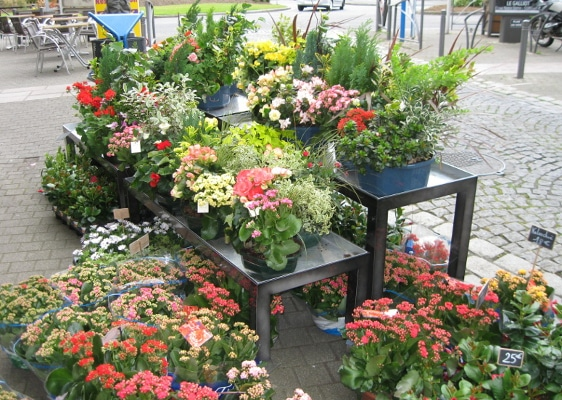 Fleuristerie - tables bacs