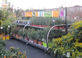 Jardinerie et Horticulture - jardipatio