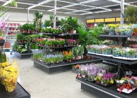 Jardinerie et Horticulture - ilôt végétal