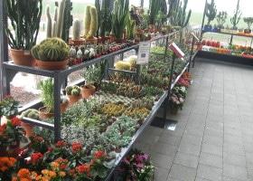 Jardinerie et Horticulture - pépiflex laqué