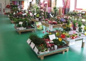 Jardinerie et Horticulture - tables bois