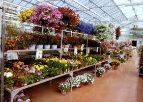 Jardinerie et Horticulture - pépiflex